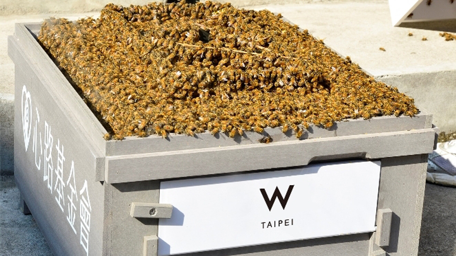 W-Taipei-hotel-urban-bee-keeping-honeybee-rooftop