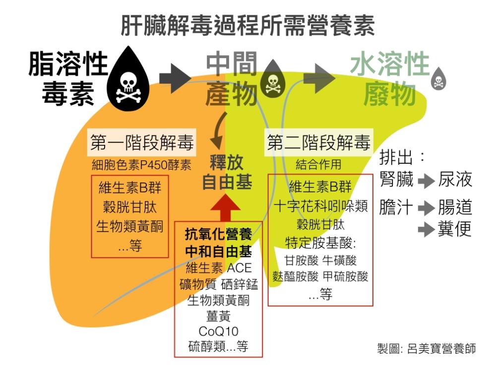 排毒系統圖.001.jpeg