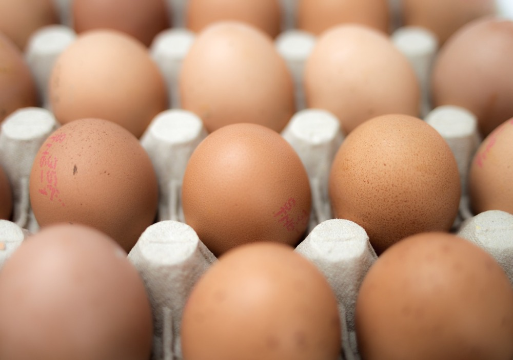 eggs-551292_1280